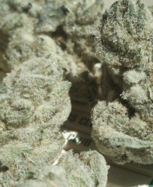 brownish green Nice dense trichome covered nuggets with shades of purple throughout.