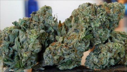 The buds have that super frosty, dipped-in-sugar