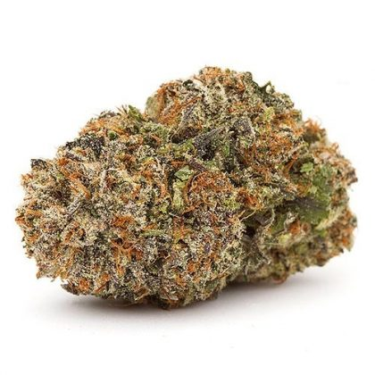 The buds are light green, dense and hard to pull apart. The nugs are tightly coated in trichomes and orange pistils.