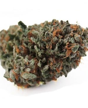 Brownish dark purple Nice dense trichome covered nuggets with shades of purple throughout.