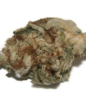 Darker green Hairy spear tip shaped buds with peach colored pistils, the trichome coverage gives it a grey looking color under certain lighting