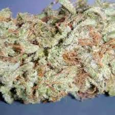 Black Jack is a marijuana strain that produces hard buds with huge, grape-like calyxes that are completely encrusted with THC